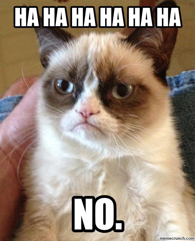 cat says no