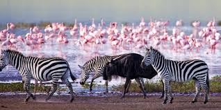 Where is Lake Nakuru National Park?