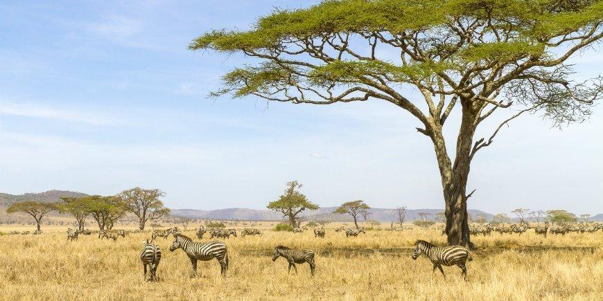Where is Serengeti National Park?